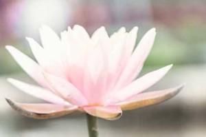 Mindfulness en yoga Eindhoven